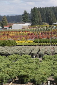 Production area at Iseli Nursery in Boring, Oregon.